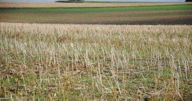 Аграрні розписки допоможуть сільгоспвиробникам успішно працювати