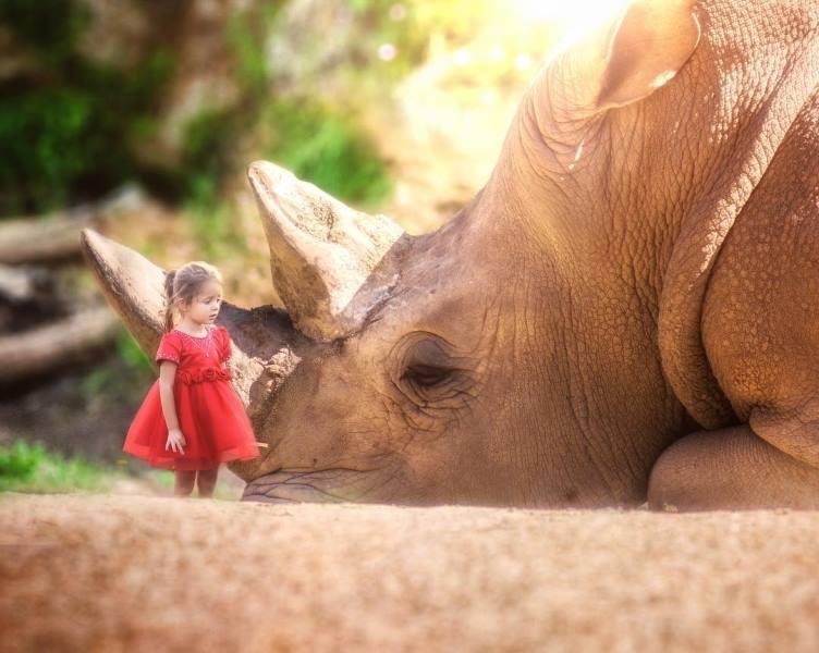 гигантские животные