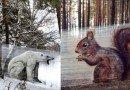 гигантские животные_стрит-арт