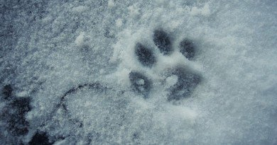 зима в Днепре