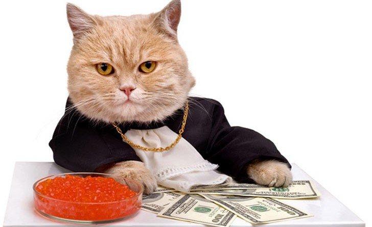 кіт з Італії