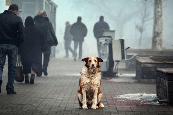 """Результат пошуку зображень за запитом """"безпритульна собака"""""""