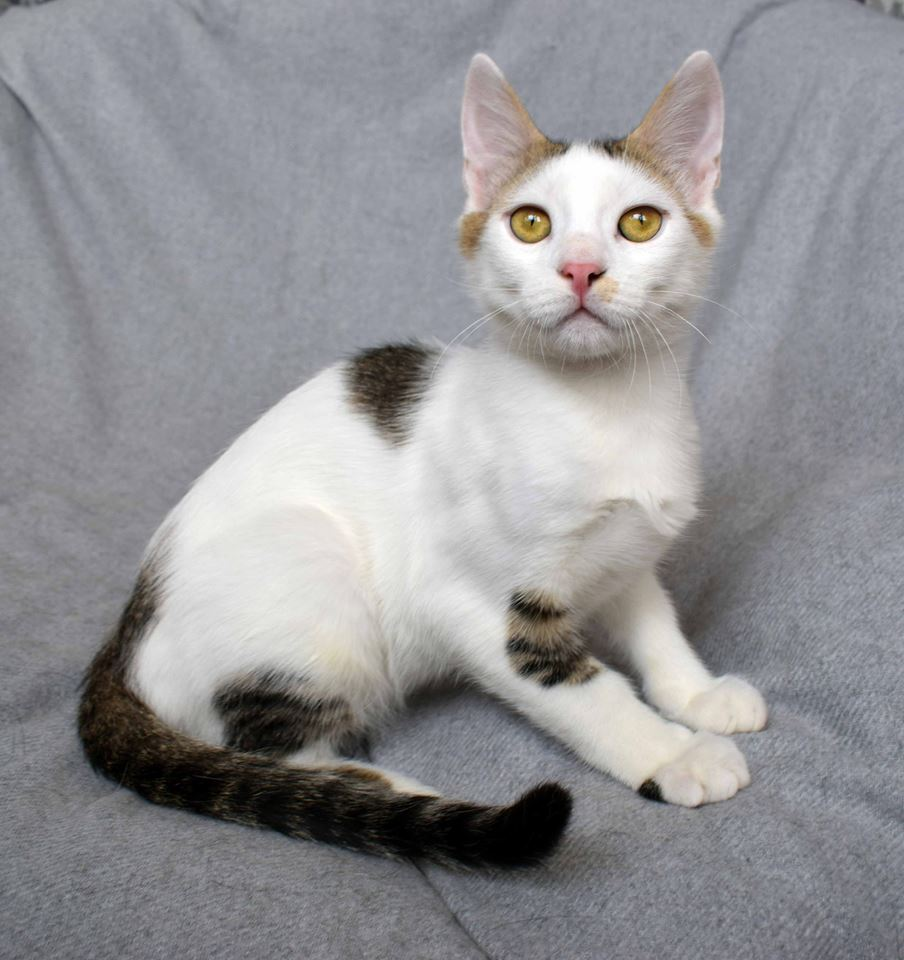 котенок Боня