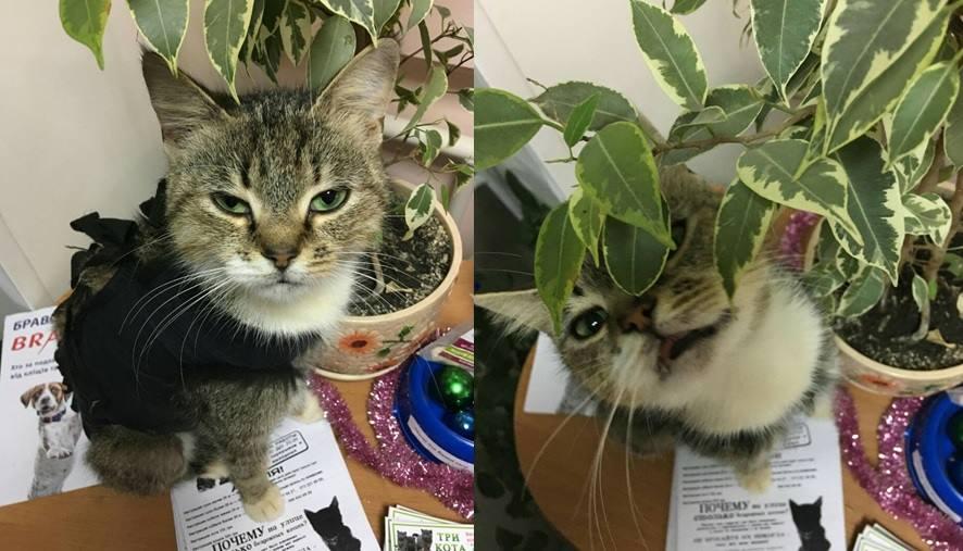 кошка Булочка_Днепр