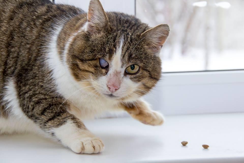 особенный кот Кузя