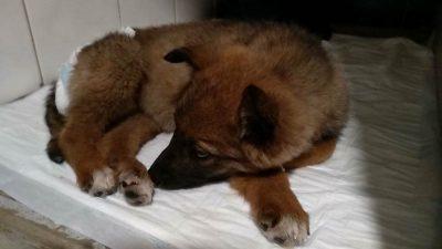 житель Днепра_спасение собаки