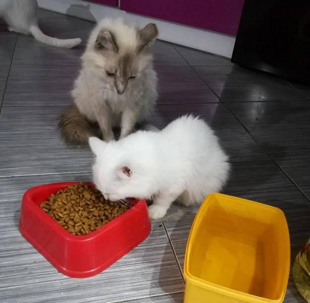 котенок из Польши