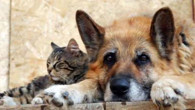 собака_кошка