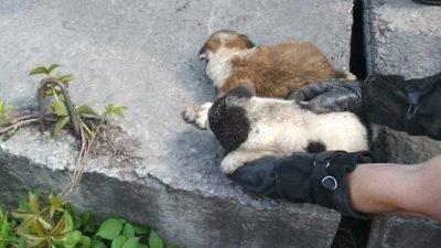 Сьогодні у Дніпрі врятували від загибелі чотирьох цуценят (Фото)