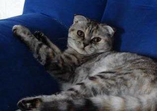 кошка_Киса