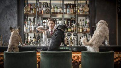 коктейли для собак