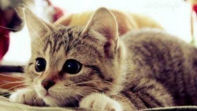 У дніпровських котів відтепер особливий статус