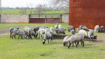 На Дніпропетровщині особливі діти опановують аграрну справу