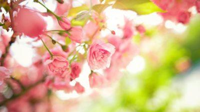 весна_погода