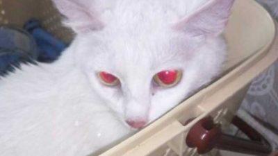 кошка из Каменского