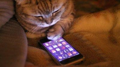кот со смартфоном