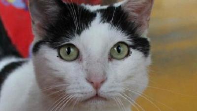 наследство_кот Пилу