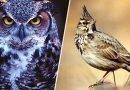 сови і жайворонки