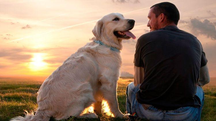 Картинки по запросу человек с собакой