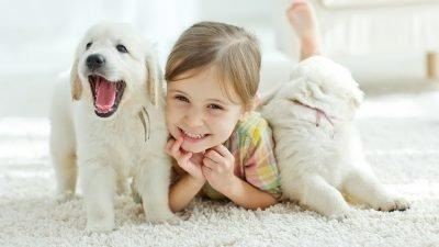 В Днепре состоится фестиваль домашних животных!