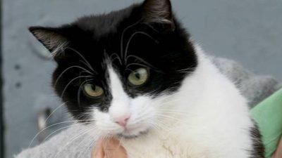 кошка с необычными лапками