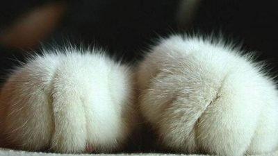 лапки кота