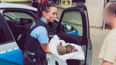 полиция Германии спасла ежей