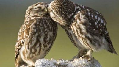 В Днепре собираются срубить домики редких птиц