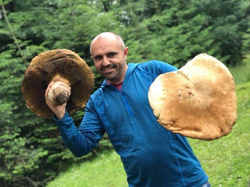 Карпаты_грибы