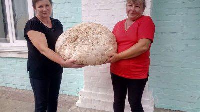 гриб-гигант