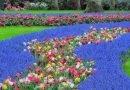 квітковий світ