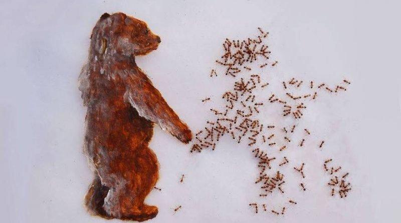 картины из муравьев