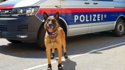 полицесйкие собаки_Австрия
