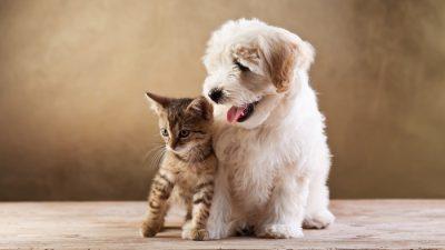 щенок_котенок