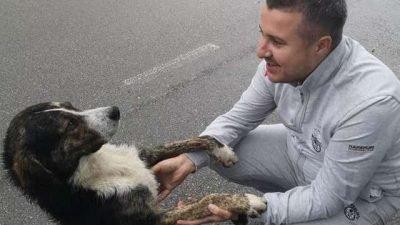 собака_Румыния