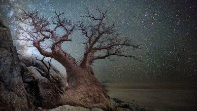 старейшие деревья_портреты