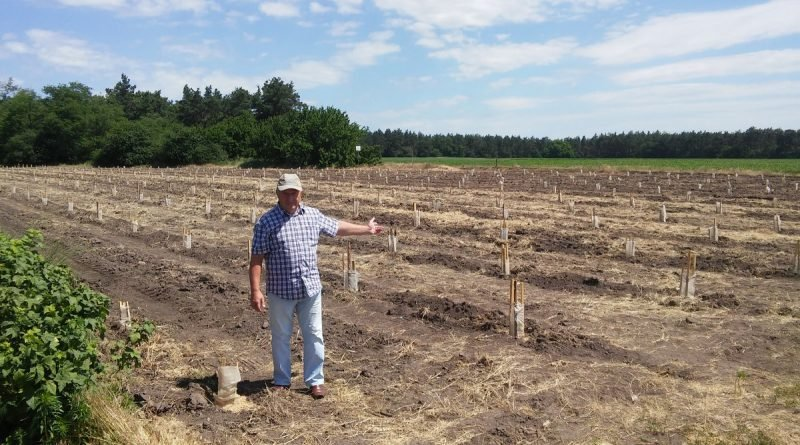 В Черкаській області фермер В'ячеслав Кантур вирощує ківі1