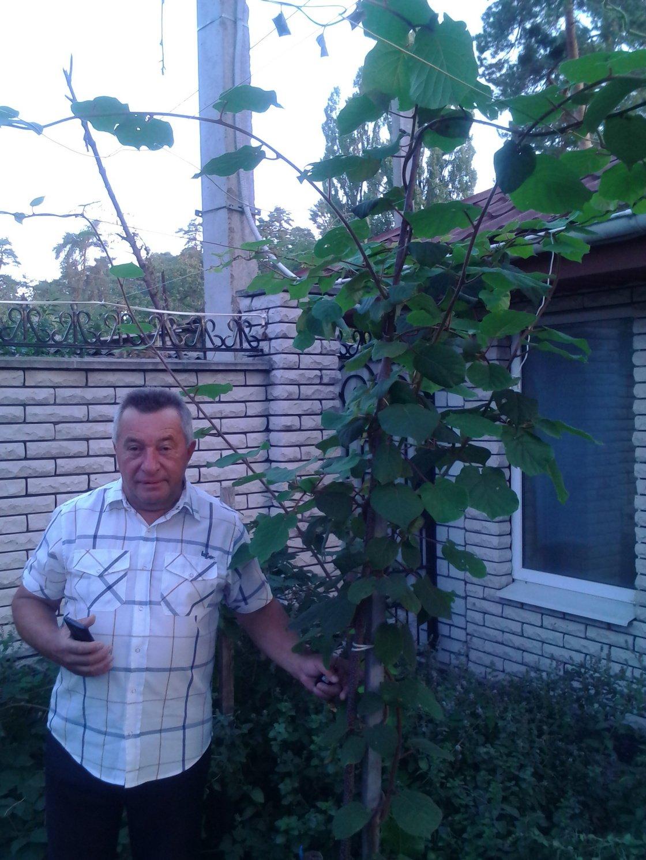 В Черкаській області фермер В'ячеслав Кантур вирощує ківі