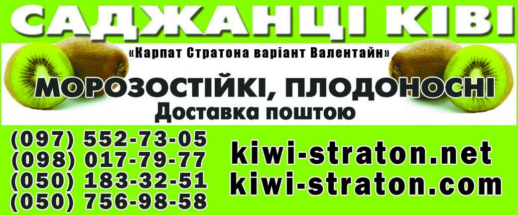 В Черкаській області фермер В'ячеслав Кантур вирощує ківі2