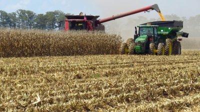 На Дніпропетровщині розпочали збирати кукурудзу
