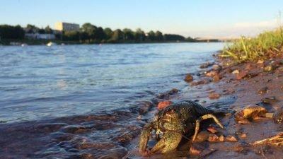 Рыбакам напомнили о запрете на вылов раков