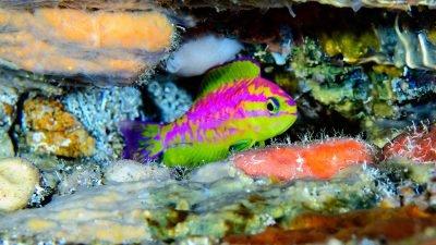 неоновые рыбы