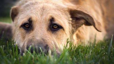 Как на Днепропетровщине спасали собаку (Фото)