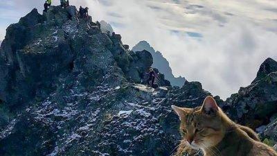 кот на вершине горы_Польша
