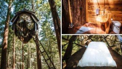 лісовий готель