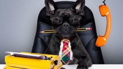 на работу с собаками