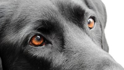 В Днепре пса «окунули» в кислоту: продолжение истории (Видео)