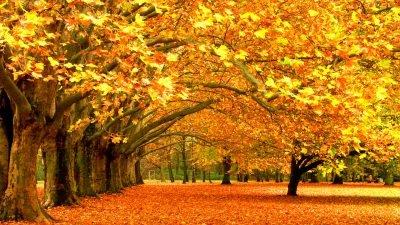 Погода у Дніпрі на 15 жовтня