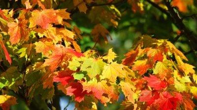 Погода у Дніпрі на 14 жовтня