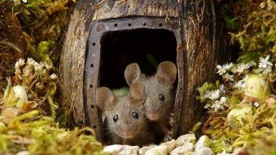 деревушка для мышей